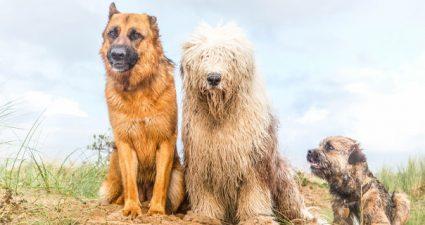 Hunde an der Ostsee
