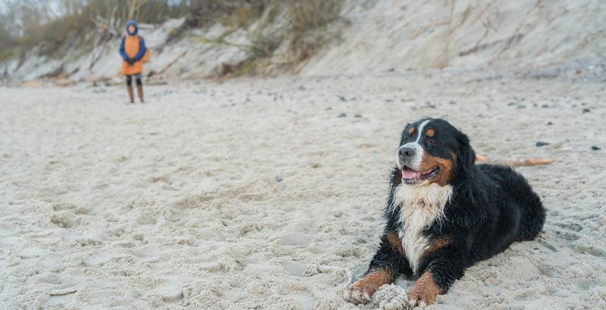 Hund am Strand an der Nordsee