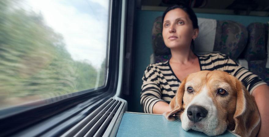 Zugfahrt mit dem Hund