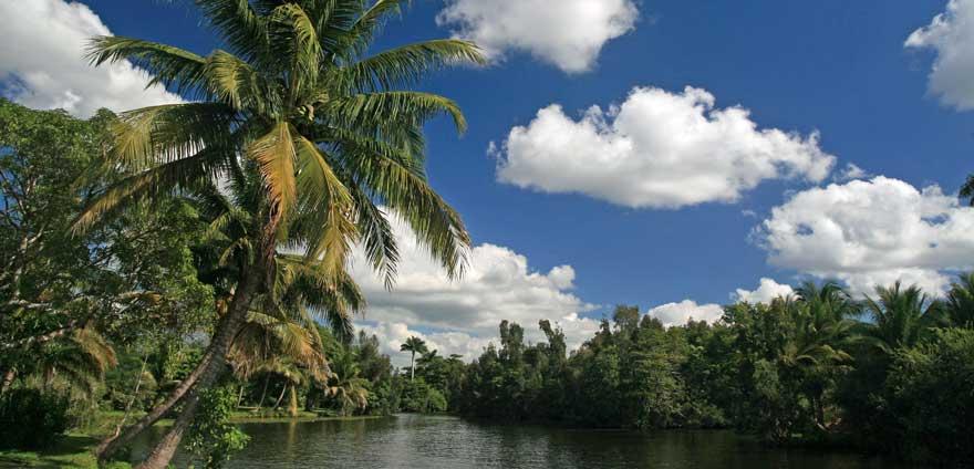 Zapata Sumpflandschaft auf Kuba