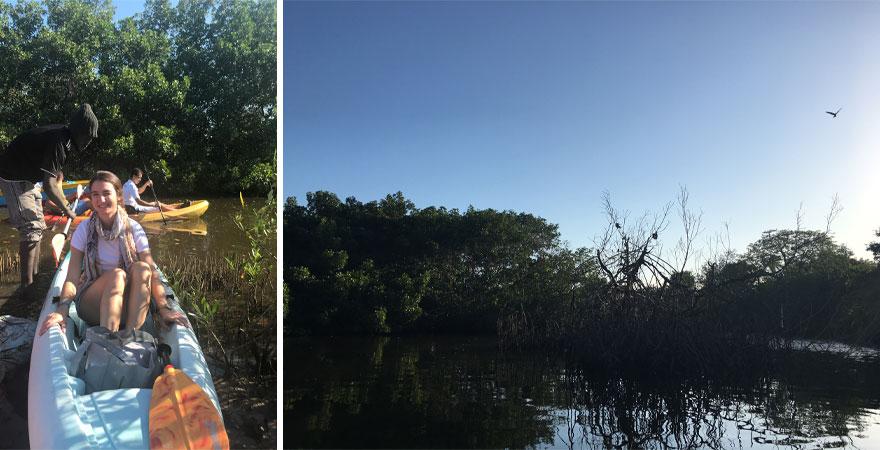 Kayaktour durch die Mangrovenwälder