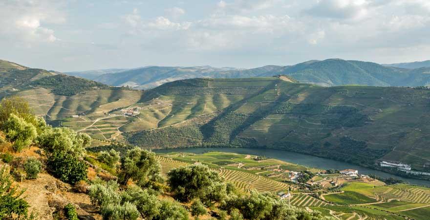 dour-tal mit weinbergen in portugal