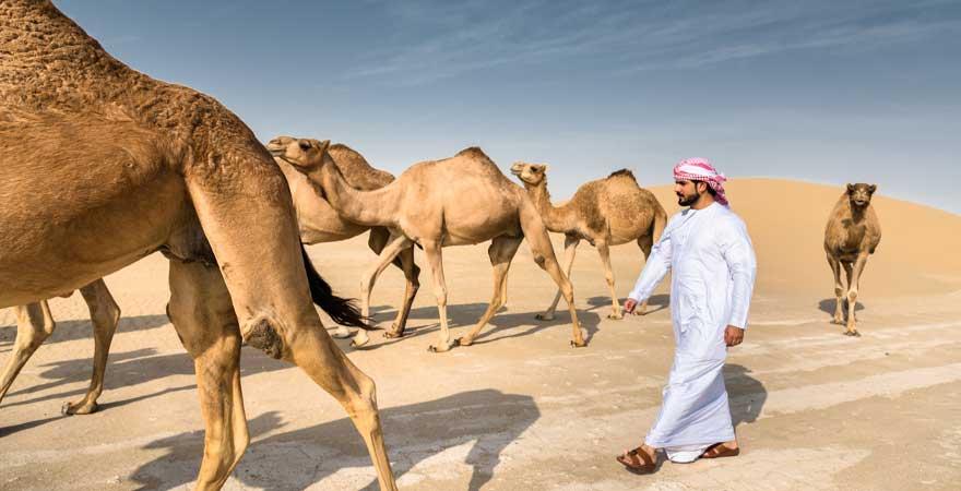 Omani mit Kamelherde in der Wüste