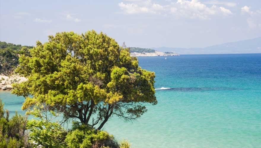 Küste mit Bäumen und Blick auf das Meer in Griechenland