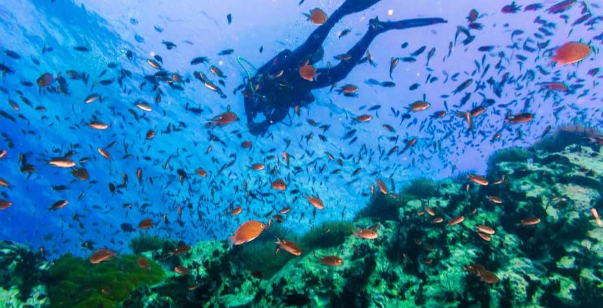 fische und korallen auf koh tao