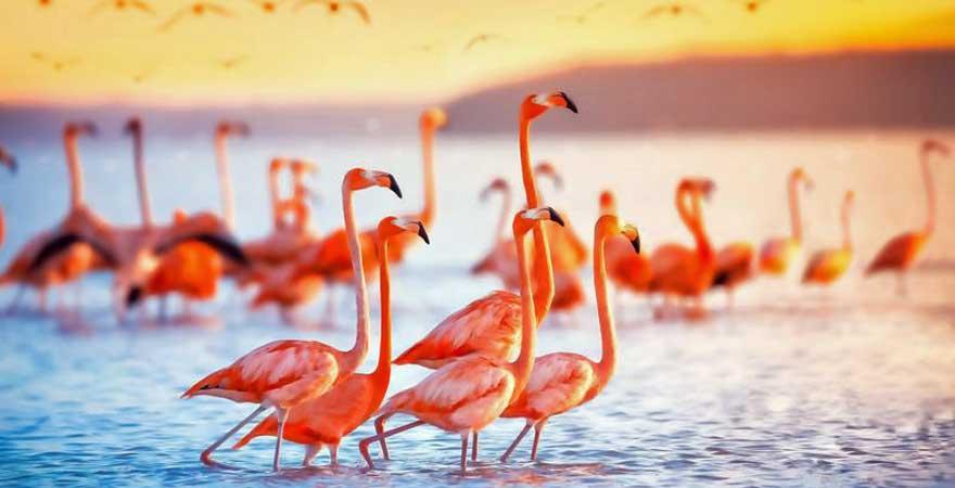 flamingos in der karibik