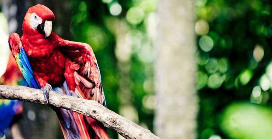 Papagei auf einem Baum