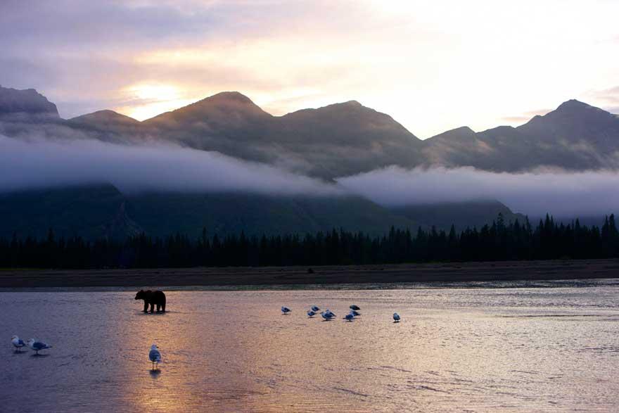 Bärenbeobachtung in Alaska