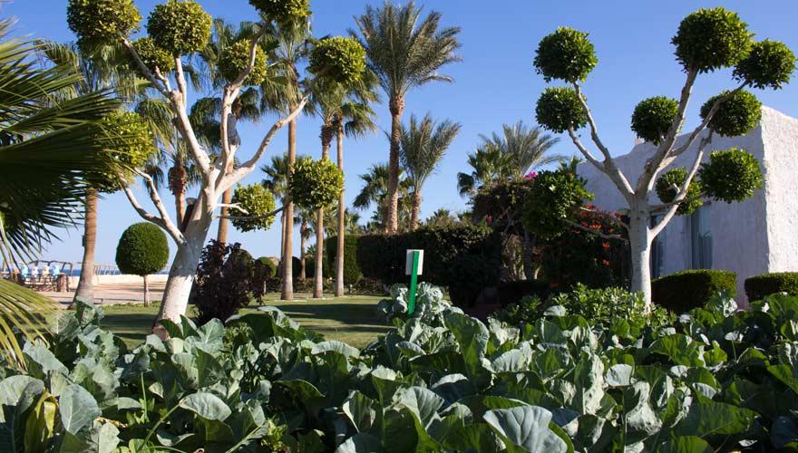 Garten im LABRANDA Tower Bay