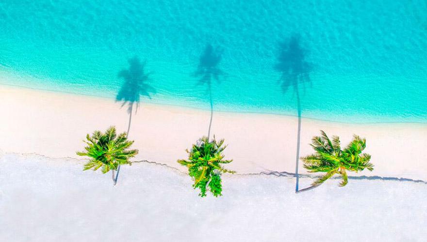 palmen am türkisfarbenem Meer