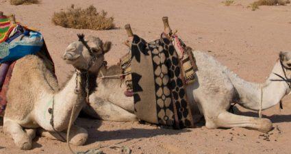 Sharm el Sheikh Reisetipps