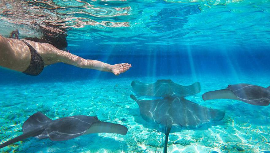 Mit Mantas auf den Bahamas schnorcheln