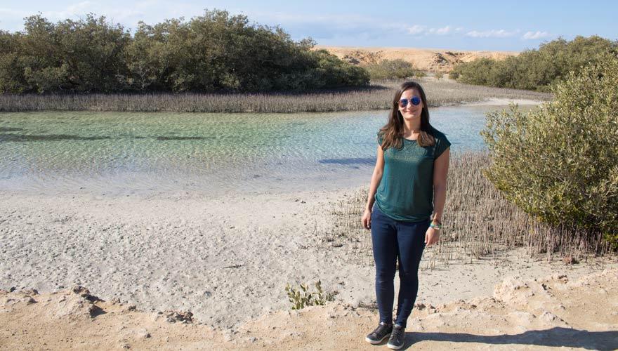 Mangroven im Ras Mohammed Nationalpark