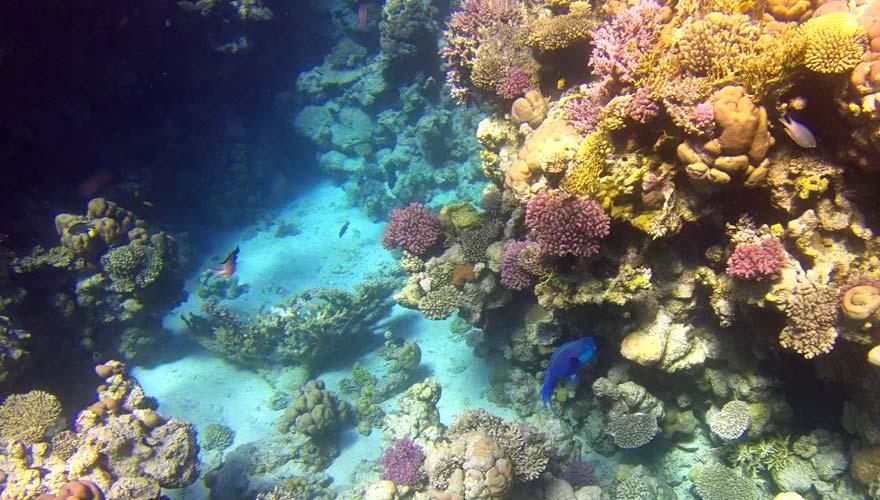 Unterwasserwelt von Sharm el Sheikh