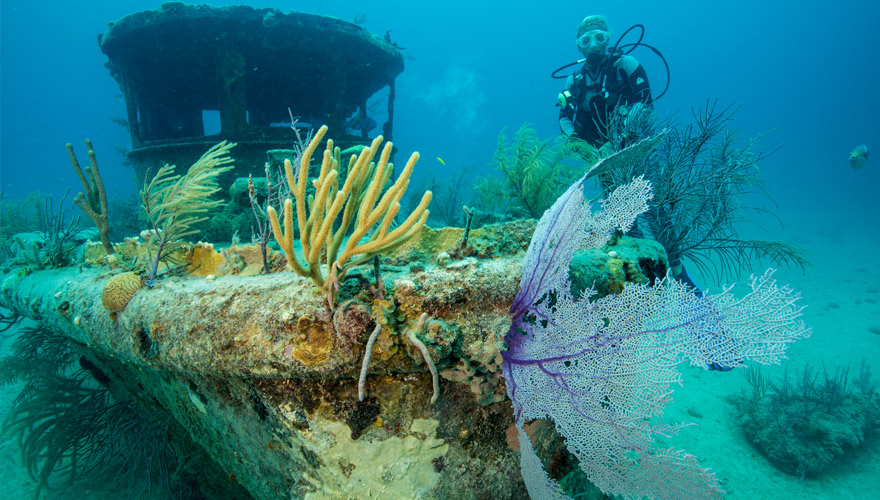 tauchen freeport auf dem Bahamas
