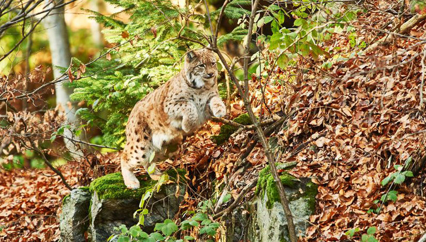 Wildtiere im Nationalpark in Deutschland