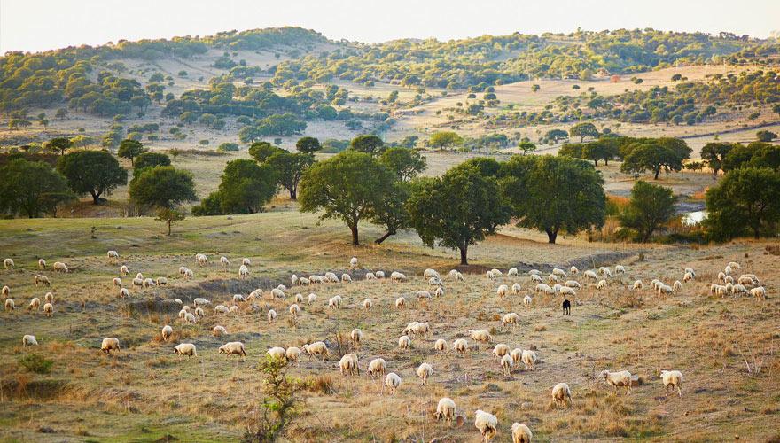 landschaft mit Schafen auf Sardinien