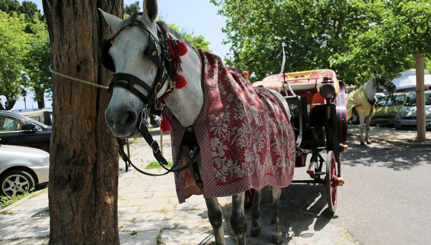 Pferdekutsche auf Korfu