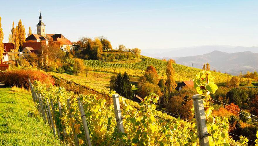 Weinberge in der Steiermark