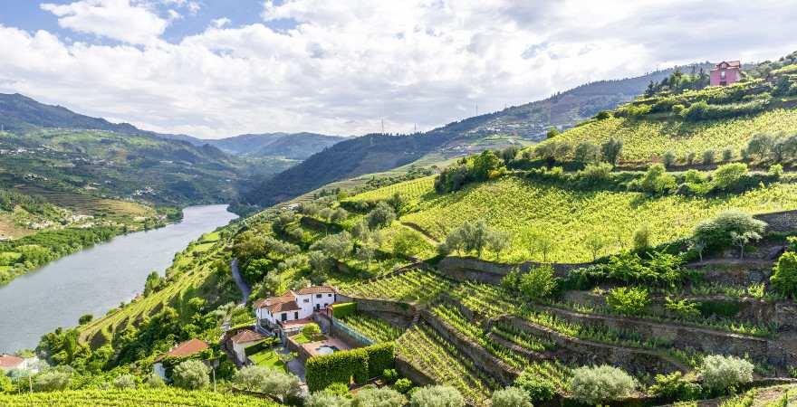Die Weinberge des Douro-Tals in Nordportugal