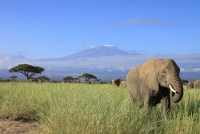 Nationalparks in Kenia