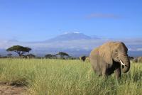 Nationalparks in Kenia