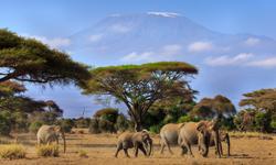 Afrika Reisen Kenia