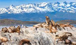 Argentinien Urlaub Feuerland Seelöwen