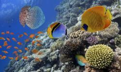 Belize Urlaub tauchen