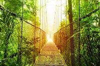 Costa Rica Rundreise Dschungel