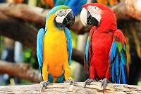 Curacao Papageien