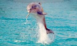 Delfin Belek Urlaub