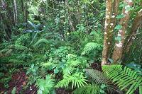 Dominikanische Republik Natur