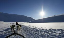 Hundeschlittenfahrt Winterurlaub Norwegen