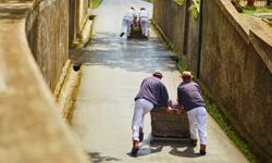Madeira Urlaub Korbschlittenfahrt