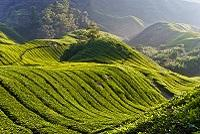 Malaysia Reisfelder