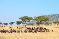 Namibia Nationalparks