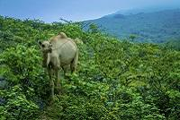 Oman Natur