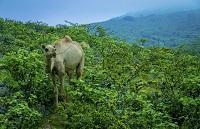Rundreise Oman Kamel