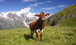Reise Österreich Tirol