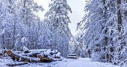 Schwarzwald Reise