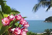 Südsee Tahiti