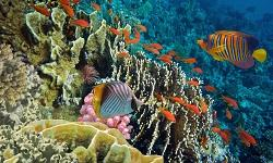 Tauchspots Malediven
