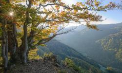 Urlaubsorte Schwarzwald