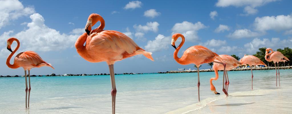 Aruba Urlaub