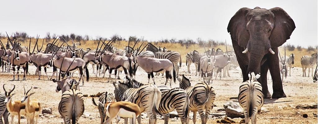 Pauschalreise Namibia