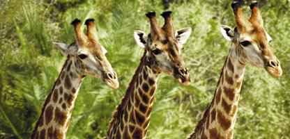 Eindrücke Namibias Rundreise