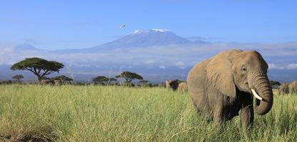 Krueger Walking Safari