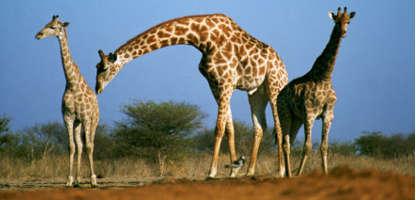 Namibia Entdeckungsreise