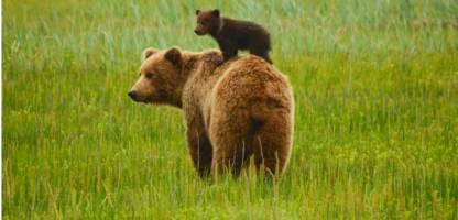 Alaska Anchorage Hotels